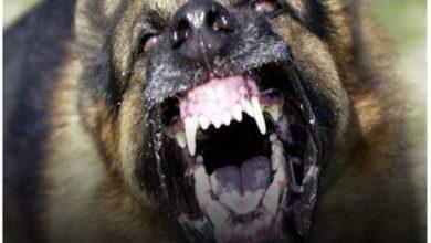 Photo of الكلاب الضالة والمسعوره بفاقوس تهدد حياة الأهالي والأطفال